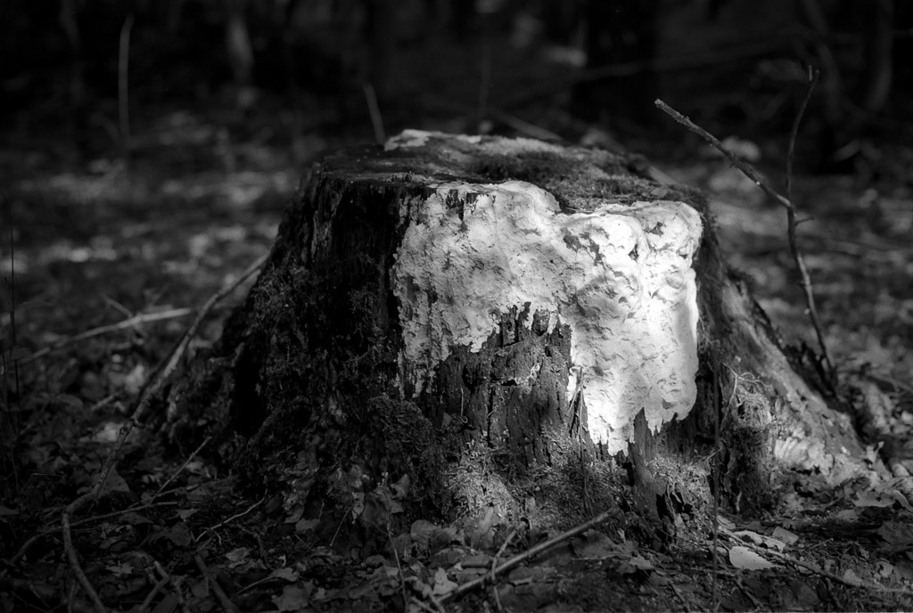 Baumstumpf auf Ilford FP4+, Blende 2.8