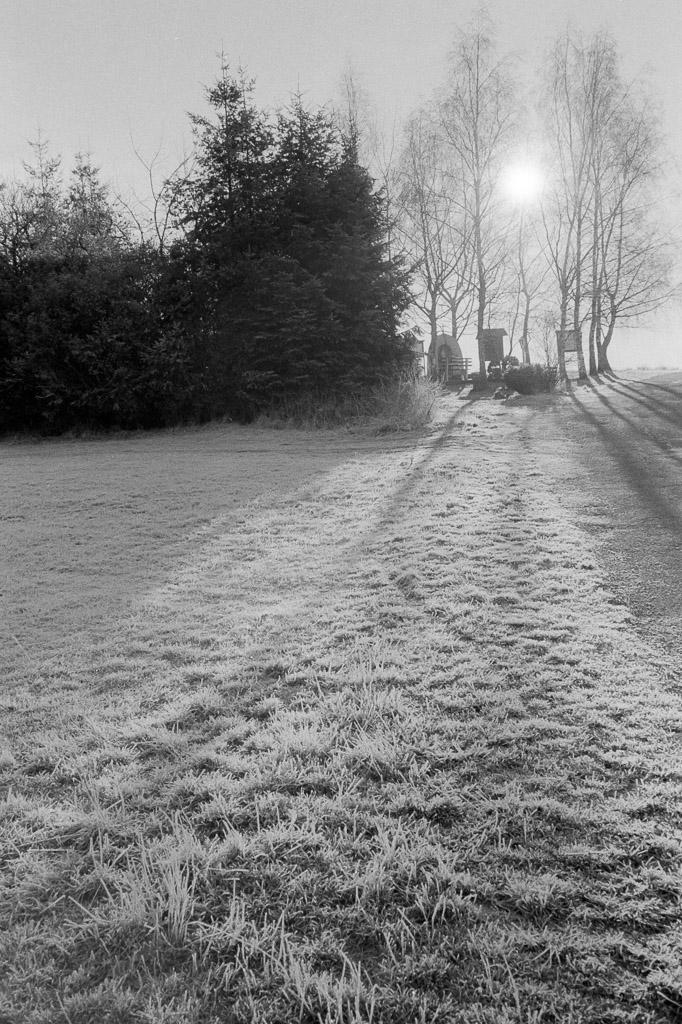 Gegenlicht und Frost auf Kentmere 400