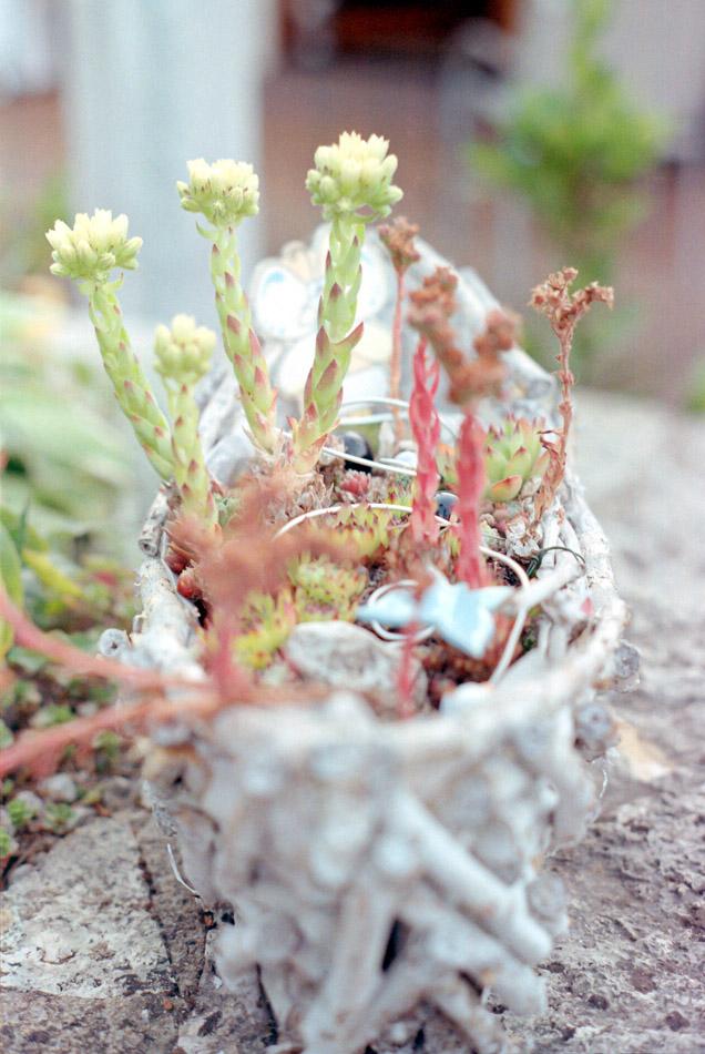 Pflanze Bokeh