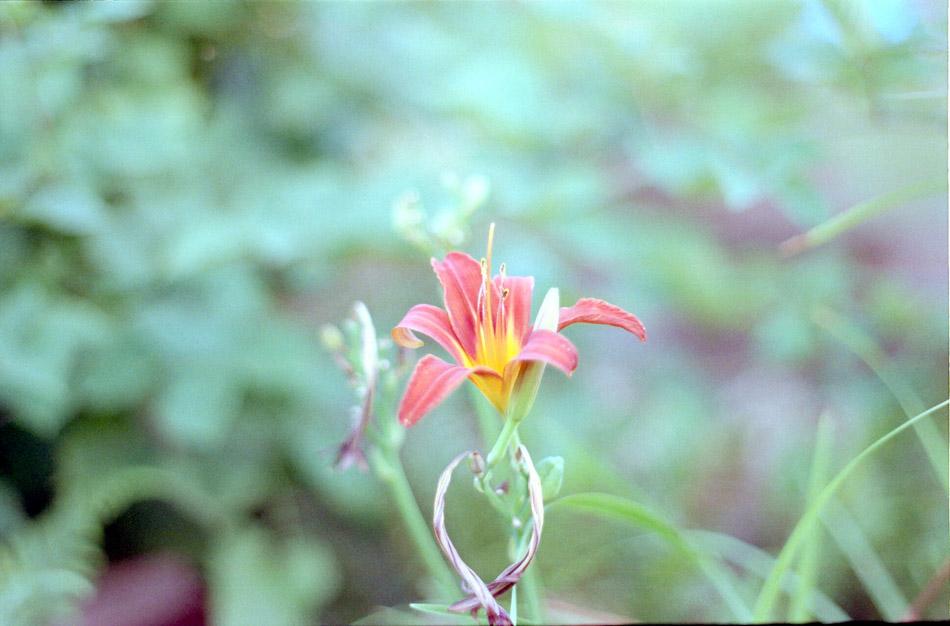 Blume Bokeh