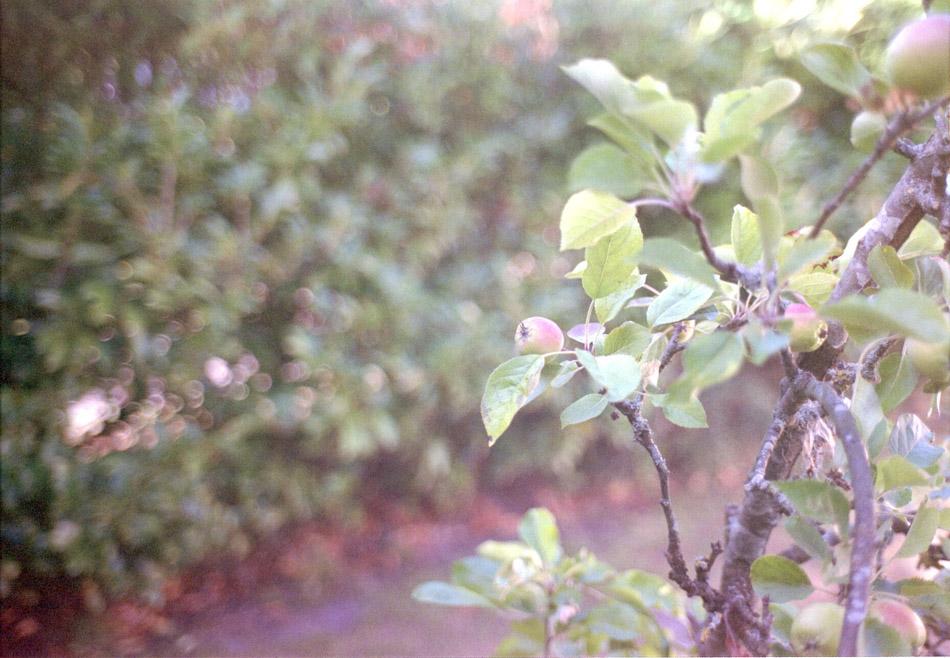 7Artisans 35mm 2.0, Blende 2.0, 1/1000s, AGFAPhoto Vista 400